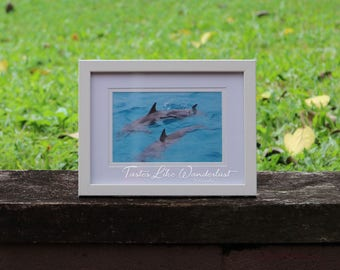 Framed Print 4x6 || Wild Dolphins