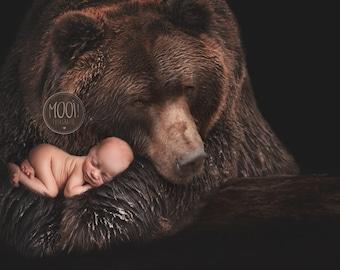 Digital Prop for Newborn - Digital background - Newborn Photography - Bear - grizzly - Animal - Nature - Wildlife