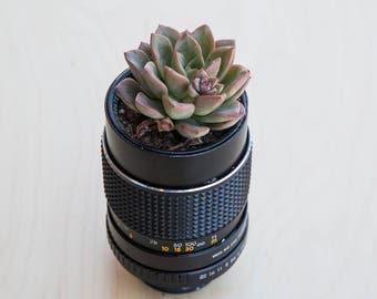 Succulent in Lens Planter