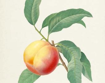 Peach Botanical Print, Peach Art Print, Fruit Art, Fruit Print, Kitchen Art, Garden, Redoute Art, La peche