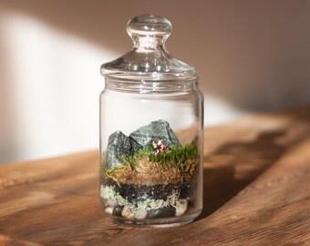 Drive me away - DIY Moss Terrarium Kit