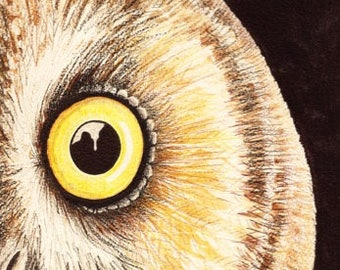 Eye Of The Wild: Long-eared Owl (Print from an Original Drawing)