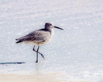 Fine Art Photograph, Sandpiper at the Beach, Cape Canaveral National Seashore