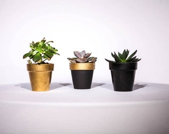 Day & Night - Plant Pot Collection