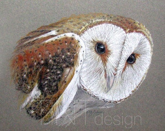 Barn Owl. Personalized Animal Portraits, colored pencil, Pet Portrait colored pencil from photo