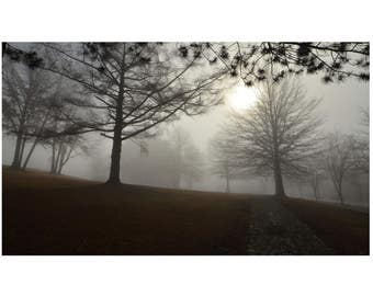 Foggy Morning with Trees in Pennsylvania Landscape Photography Fine Art Photography
