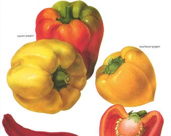 Set of 2 Vintage Vegetable Prints Peppers 1970s Illustrated Color Plates Book Pages
