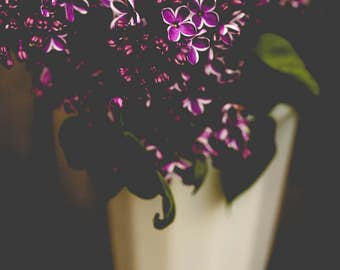 Dark Moody Art - Lilac Photograph - Flower Photography - Floral Wall Art - Still Life Photograph - Black Purple White - Farmhouse Wall Art