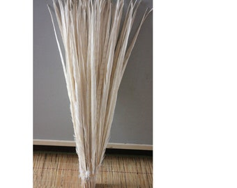 White Pheasant feathers - tail feathers 20 to 22 inch long large - off white beige ivory extra large - for millinery crafts regalia - dyed