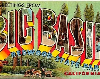 Vintage California Postcard - Greetings from Big Basin Redwoods State Park (Unused)