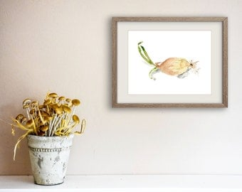 Onion art print, Onion Giclee watercolor print, still life onion, botanical print, onion watercolor, vegetable art print, kitchen art