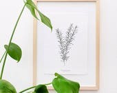 Botanical Print: Rosemary, Kitchen Art Print, Floral Print, Floral Illustration, Urban Jungle Print, Black and White, Gift for Plant Lovers