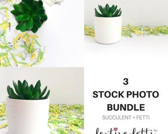 Succulent Stock Photo / Styled Stock Photos / Succulent Stock Photos / Potted Succulent / Flat Lay / Digital Image / Stock Photo Mockup