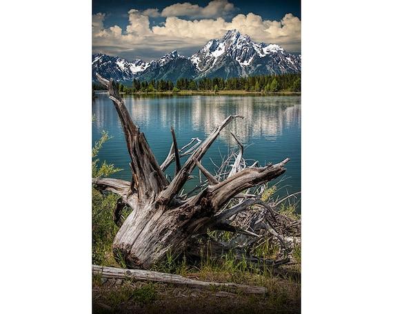 Jackson Lake and Uprooted Tree Stump with Mountain Scene at Grand Teton National Park in Wyoming No.1397 - A Fine Art Landscape Photograph