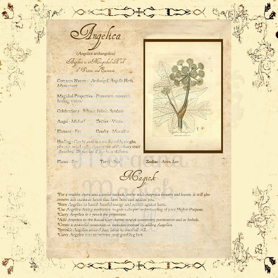 ANGELICA MAGICK HERB , Digital Download, Book of Shadows Grimoire, Scrapbook, Spells, White Magick, Wicca, Witchcraft, Herb Magic