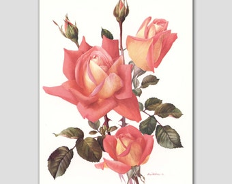 """Rose Print, Vintage Botanical Book Plate, Orange Wall Decor, 1960s Flower Illustration """"Tzigane"""" No. 25"""