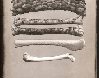 SOFT BONES Palladium Print