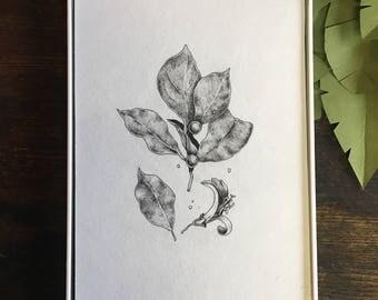Honeysuckle Original Botanical Illustration | Floral Drawing | Vintage Inspired Nature Illustration