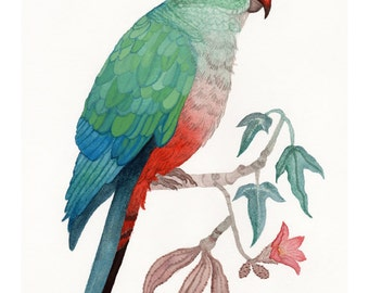 King Parrot and Brachychiton Populneus Print, Watercolour Painting Archival Print
