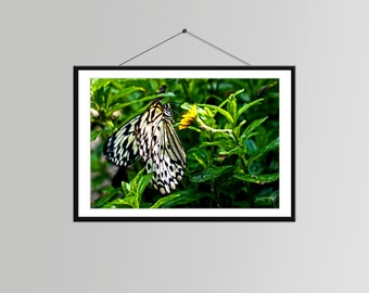 Butterfly on a Flower in Singapore // Butterfly Art - Butterfly Wall Decor - Nature Photography - Butterfly Bedroom Art - Butterfly Picture