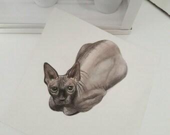 Original drawing of Kat Von D's sphynx cat Poe colored drawing original art handmade artwork cat drawing