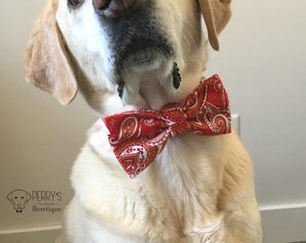 Red Paisley Bow Tie & Collar