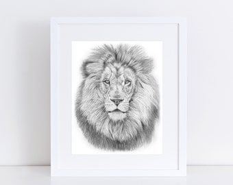 Lion Illustration Print, Graphite Pencil Realistic Drawing Of Safari Animal Africa