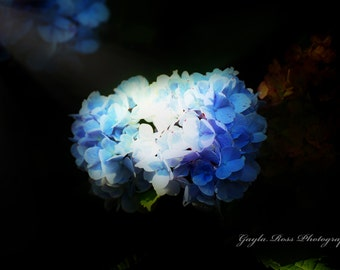 Hydrangea Photography,Floral Photgraphy,Botanical Photography,Flower Photography,Blue Hydrangea,Blue Flower,Nature Photography,Spring,Garden