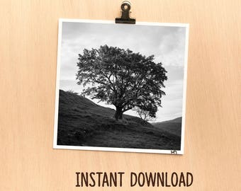 Instant download picture - Nature tree in black and white