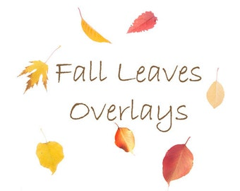 16 Fall Leaf Overlays for Photoshop and Photoshop Elements/Transparent PNG, Autumn, Leaves.  Instant Download