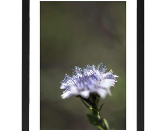 Lilac flower print, digital downloads, posters, flower, macro photography