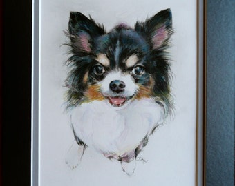 Dog Drawing - Long-Haired Chihuahua
