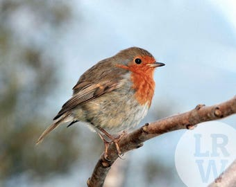 Fine Art Photography Robin Bird Digital Download