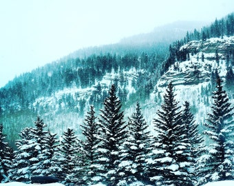 Wintry Trees of Vail Valley Greeting Card