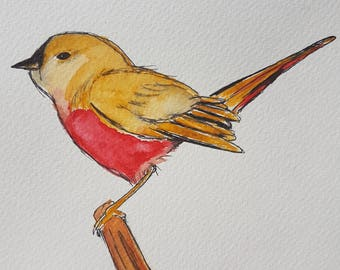 Finch Hand Drawn & Painted - Original, Framed