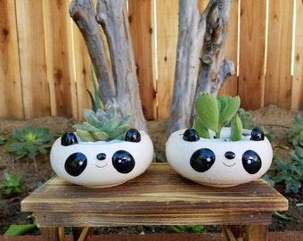 Adorable cute panda  bear kids animal planter pot with succulent