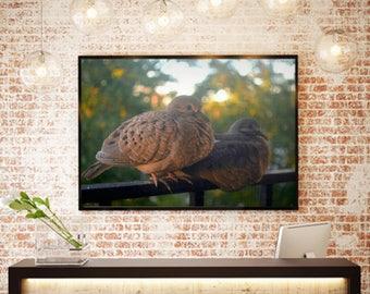 Lovebird Print - Bird Photography - Nature Print - Summer - Bird Print - Home Decor - Wall Art - Print