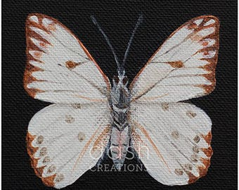 Taxidermy Inspired Butterfly Print - Cabbage White (Pieris Rapae)