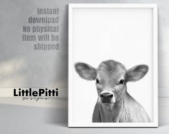 Calf print, baby cow farm animal, photo babies room, farmhouse decor, cute baby cow print, little calf photo, black white and grey animal