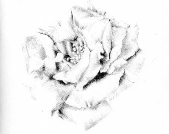 Greeting Card - Rose II