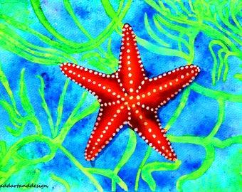 Starfish limited edition print