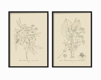 Botanical Print Set of 2 - Botanical Vintage Prints - Vintage Botanical Print Set - Vintage Botanical Prints - Black  Cream Vintage Art