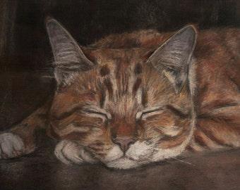 Custom pastels cat portrait