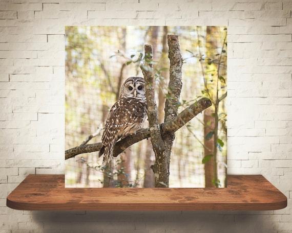Owl Photograph - Fine Art Print - Color Photo - Wall Decor - Owl Wall Art - Owl Pictures - Owl Decor - Nature Photography