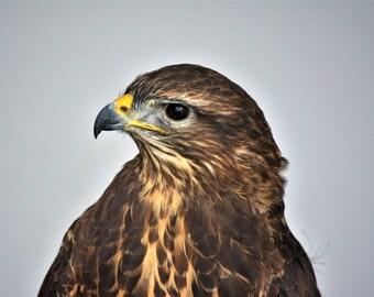 Bird of Prey Original Photograph