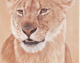 Lioness Starter Pack