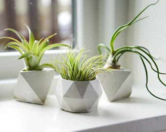 THREE Geometric Concrete Air Plant Holders, Natural Air Plant Display, Cement Planter, Low Shipping, Wedding Favors!