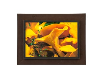 Chanterelles – Signed Photograph and Custom Frame