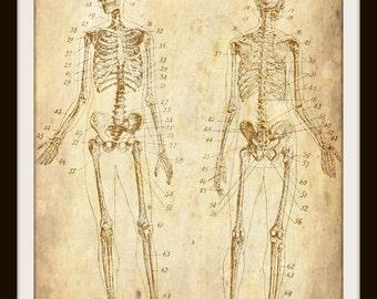 Instant Download, Vintage, Human Skeleton, Human Bones, Art, Anatomy, Print, Halloween Decor, Medical, Printable Wall Art, JPEG