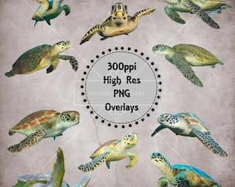 Sea Turtle Overlays, Separate PNG Files, High Resolution, Instant Download.